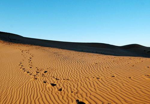 推理游戏:沙漠奇案